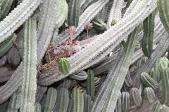 J-Wiener_LA_DesertPlants_3019