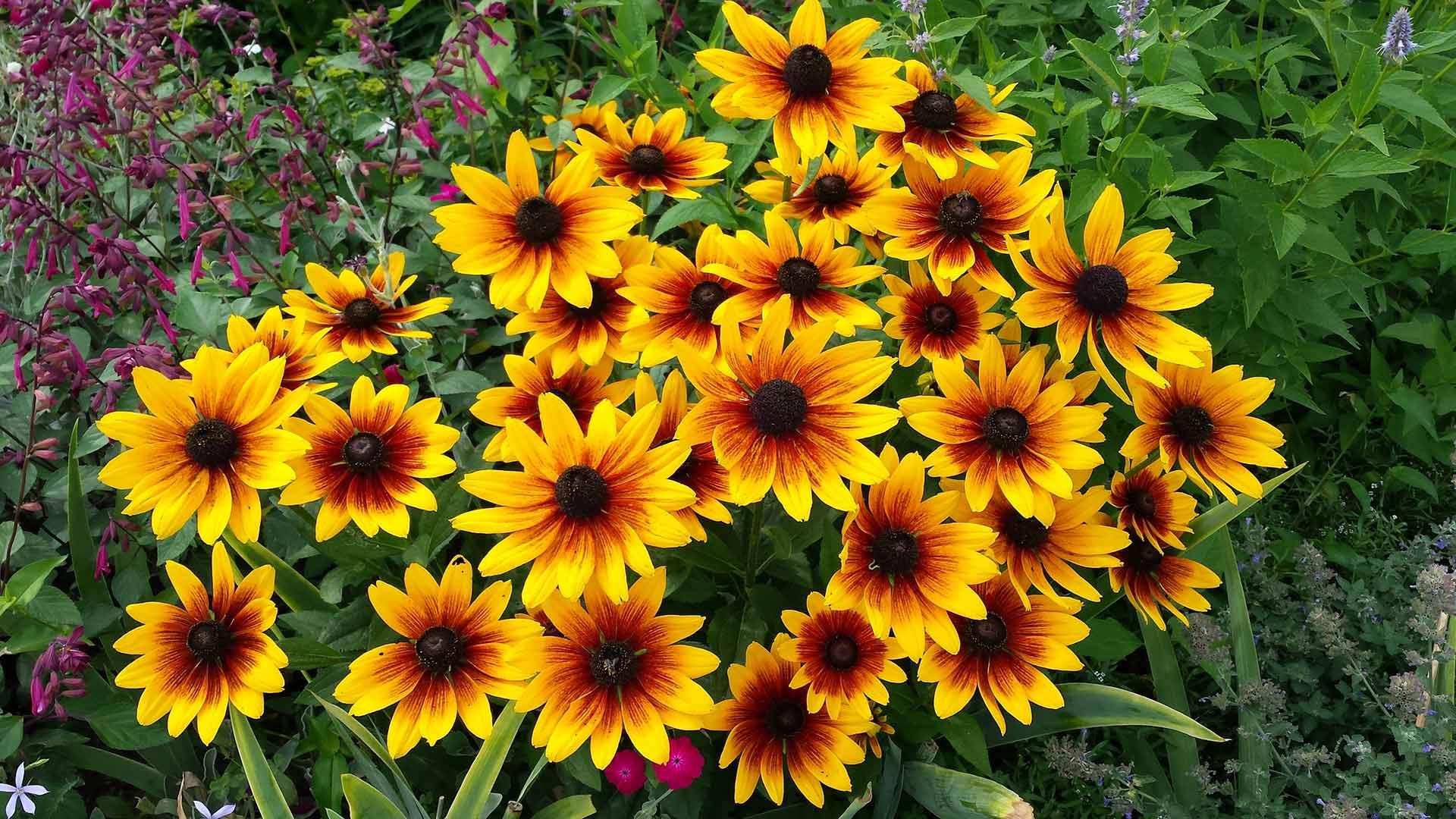 Jeffrey-Wiener_Florals