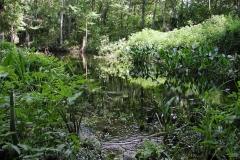 FloridaSwamp1
