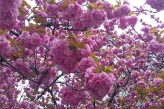 Jeffrey-Wiener_Spring-Blossoms
