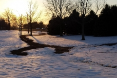 Trees_SnowCover