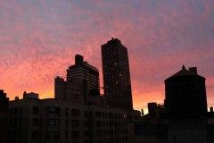 NYC_Landscape_Fall-2013